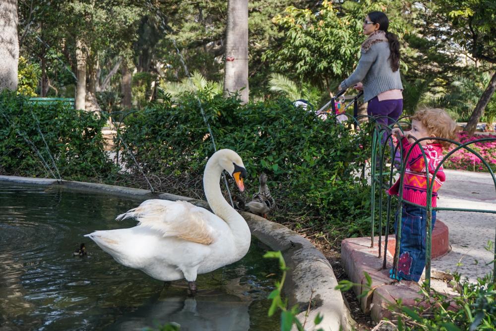 malta San Antonio Gardens 2