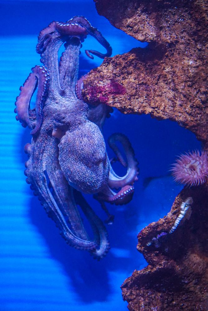 malta aquarium-12
