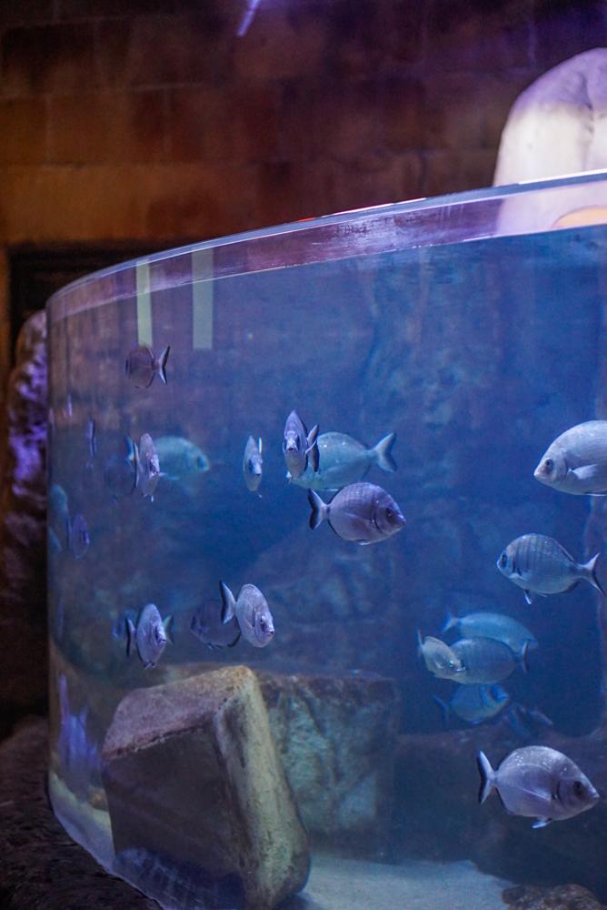 malta aquarium-13