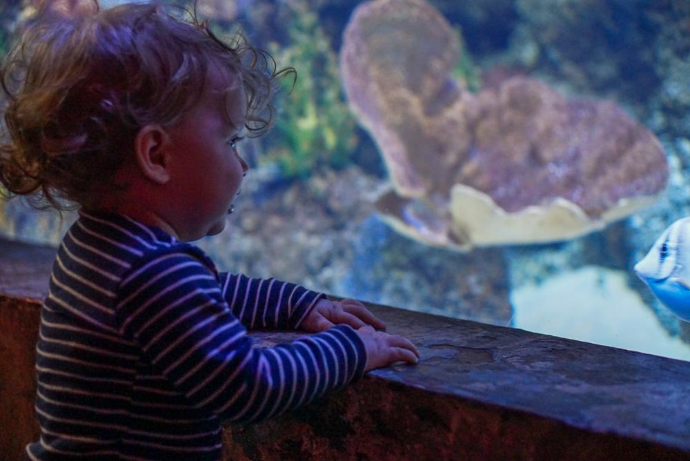 malta aquarium-18