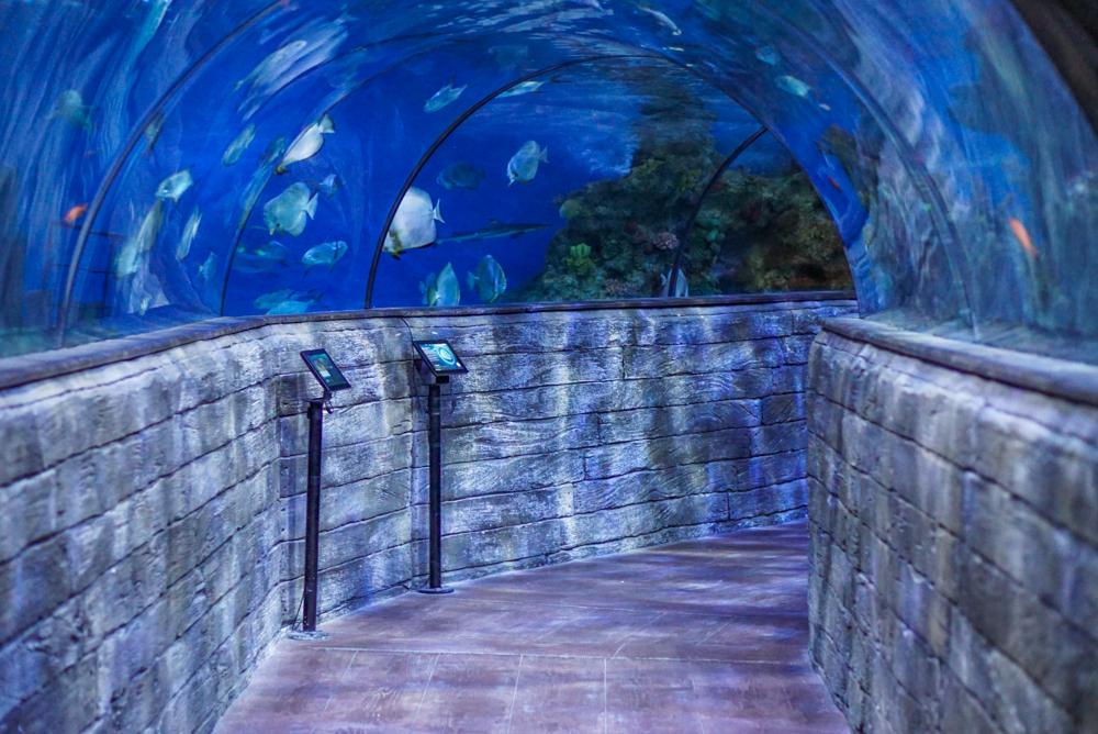 malta aquarium-19