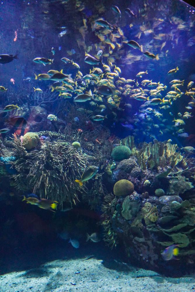 L'Oceanografic interior 2