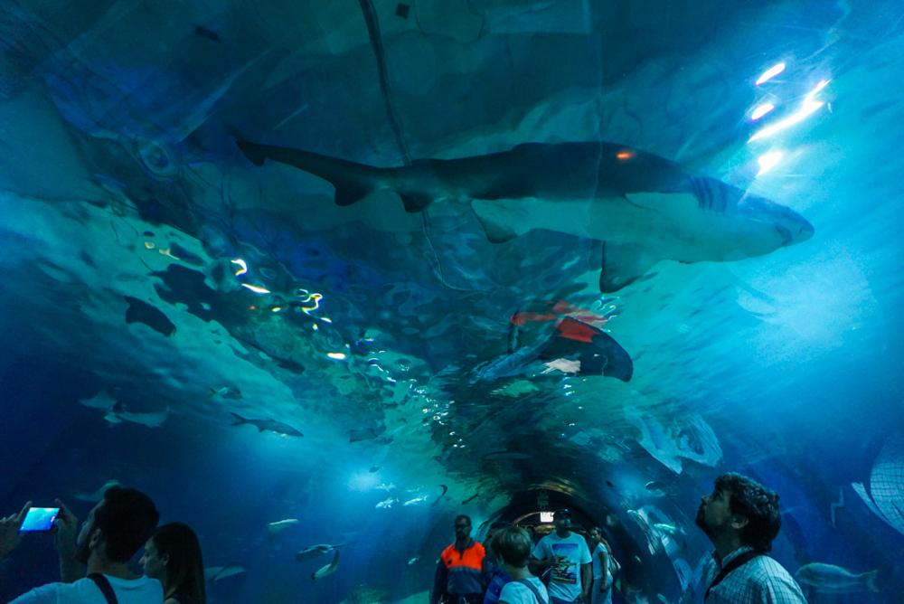 L'Oceanografic interior 5