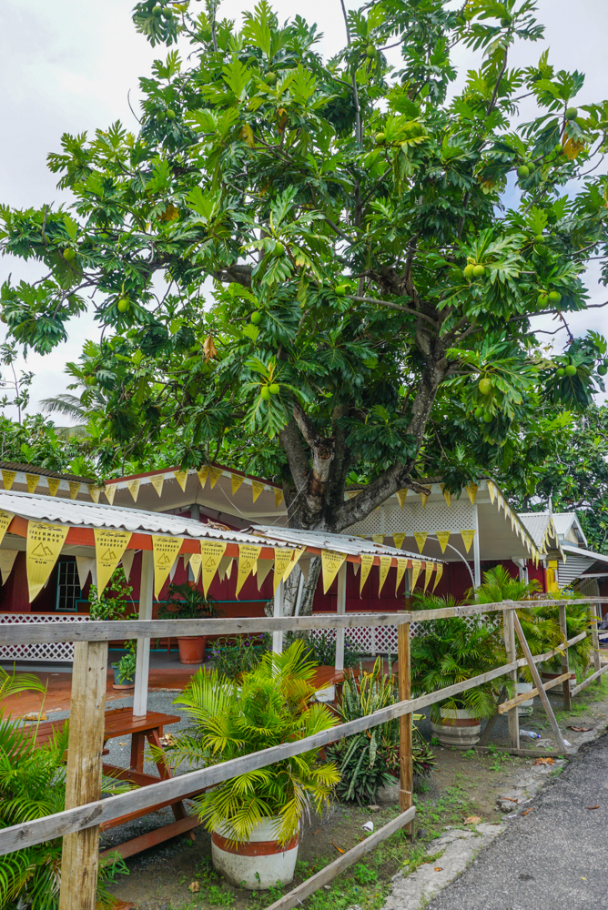 gros islet st lucia-54