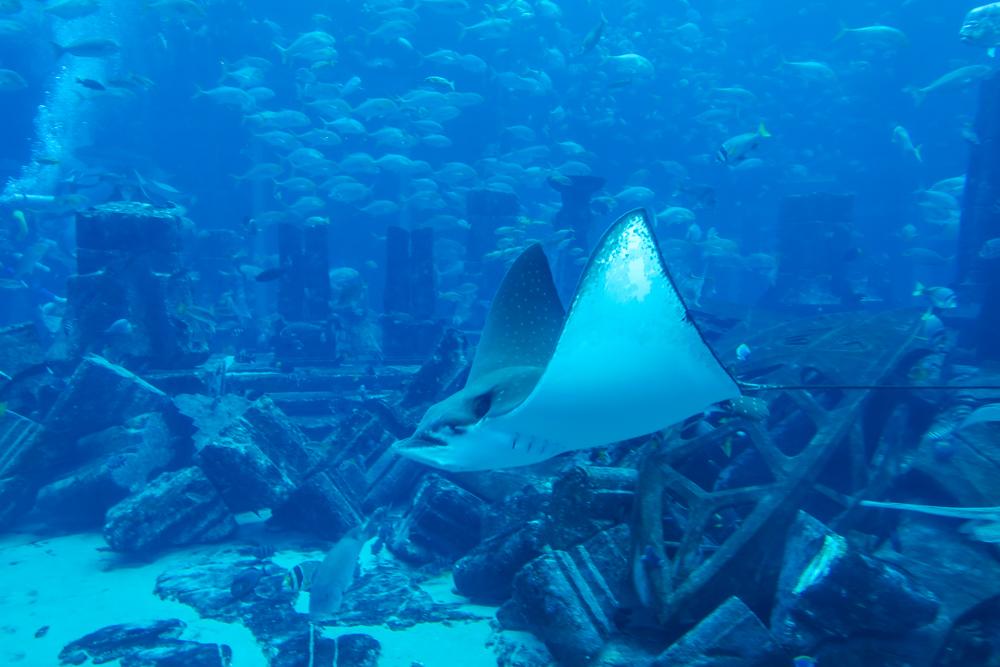 atlantis-aquariumdubai-familii-17